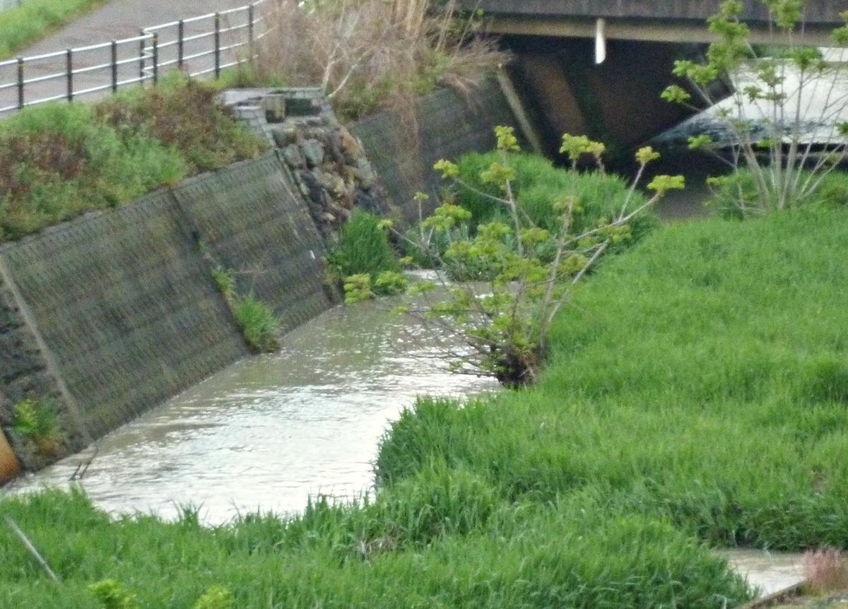 やや増水した川