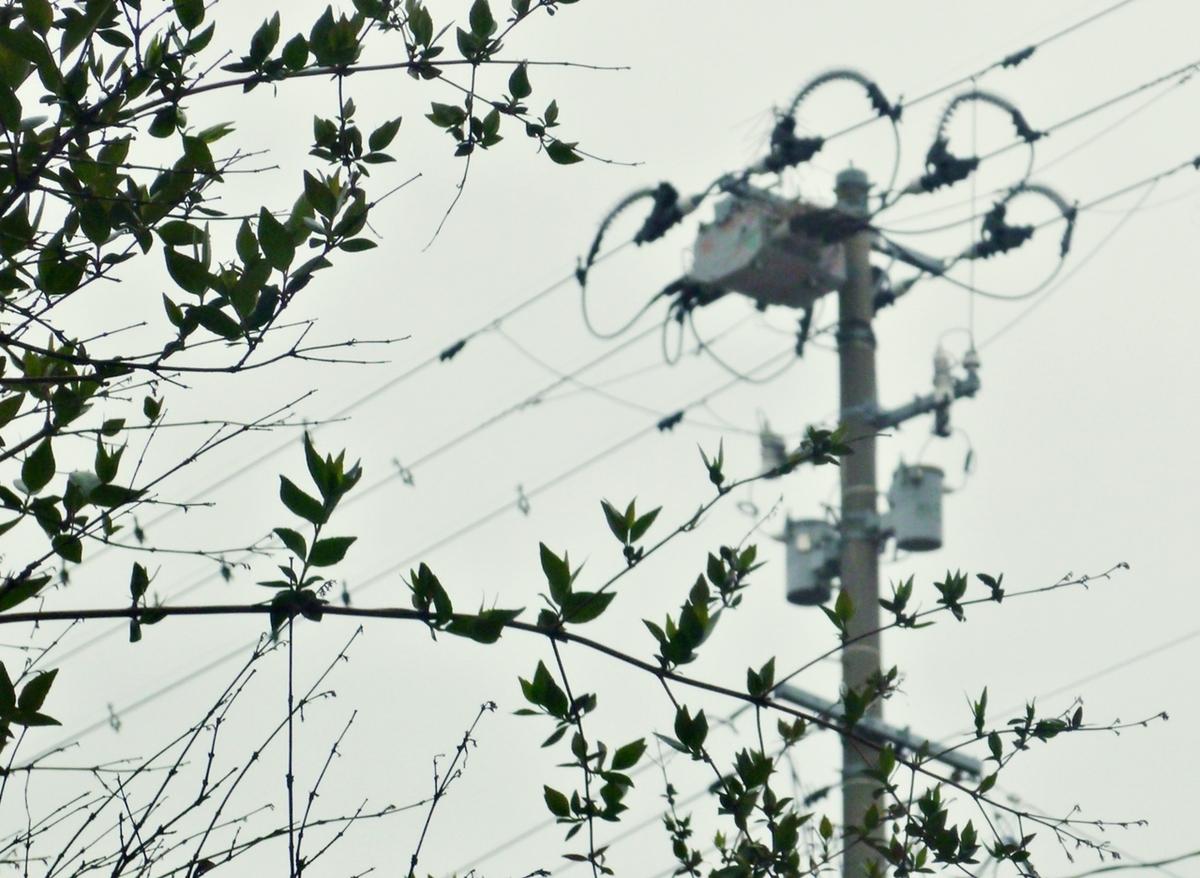 庭の枝越しの電柱