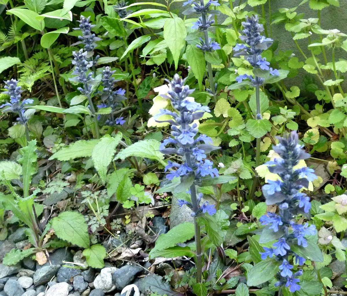 青紫の小さな花