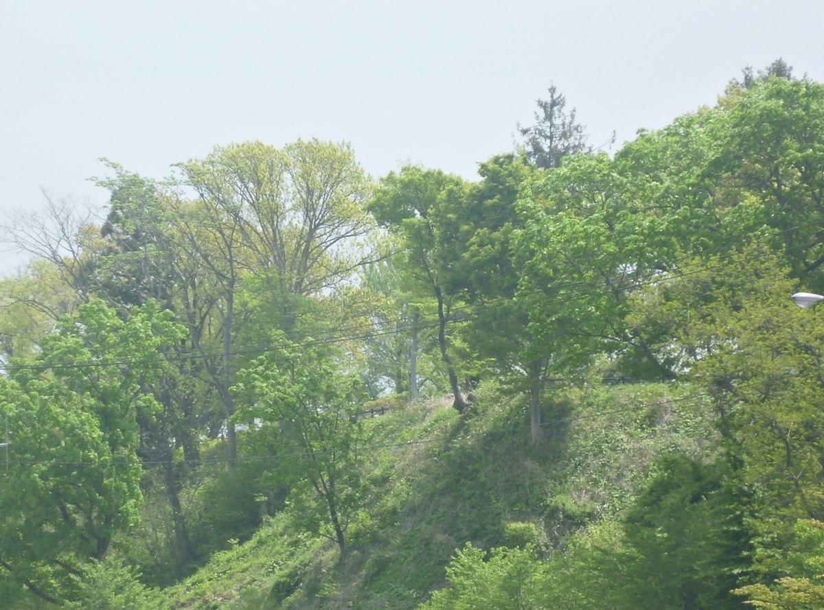 林の斜面の新緑