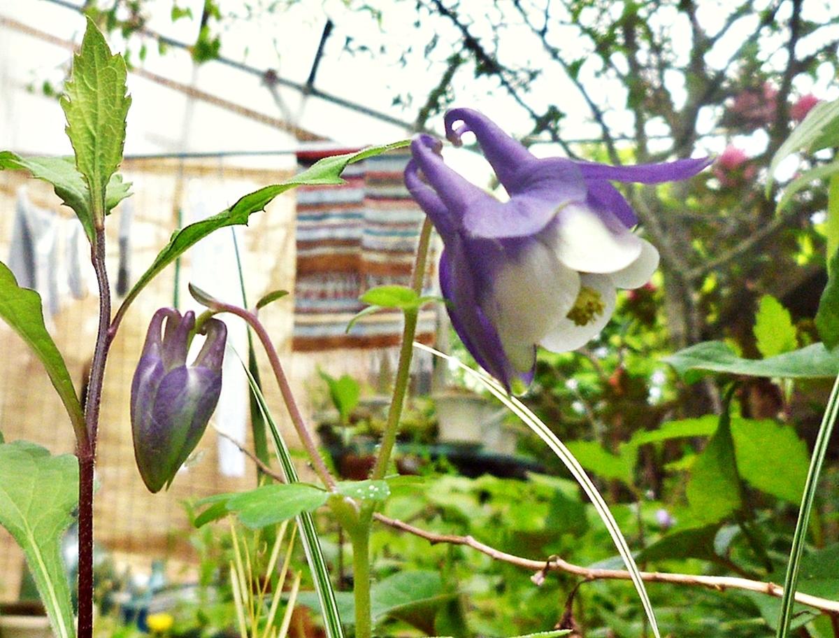 小さい紫色の花