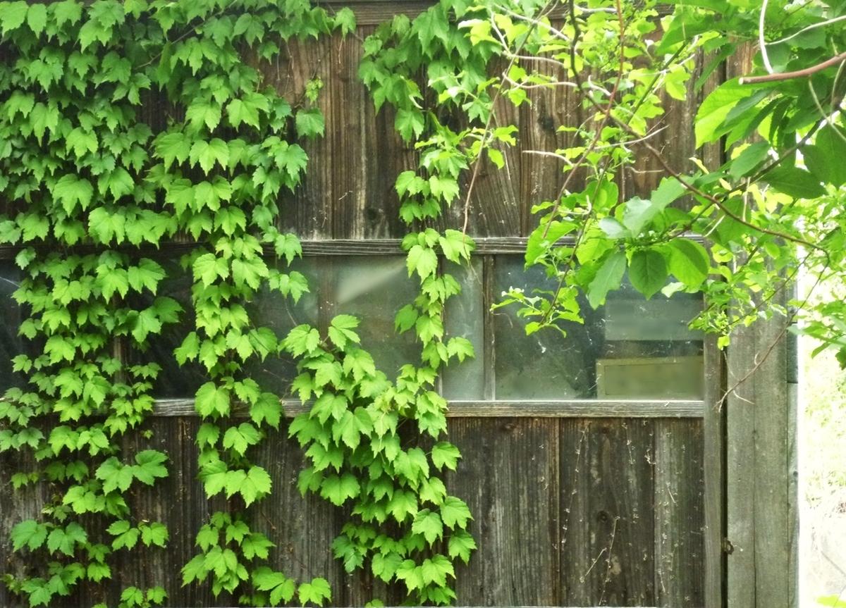 裏庭の小屋