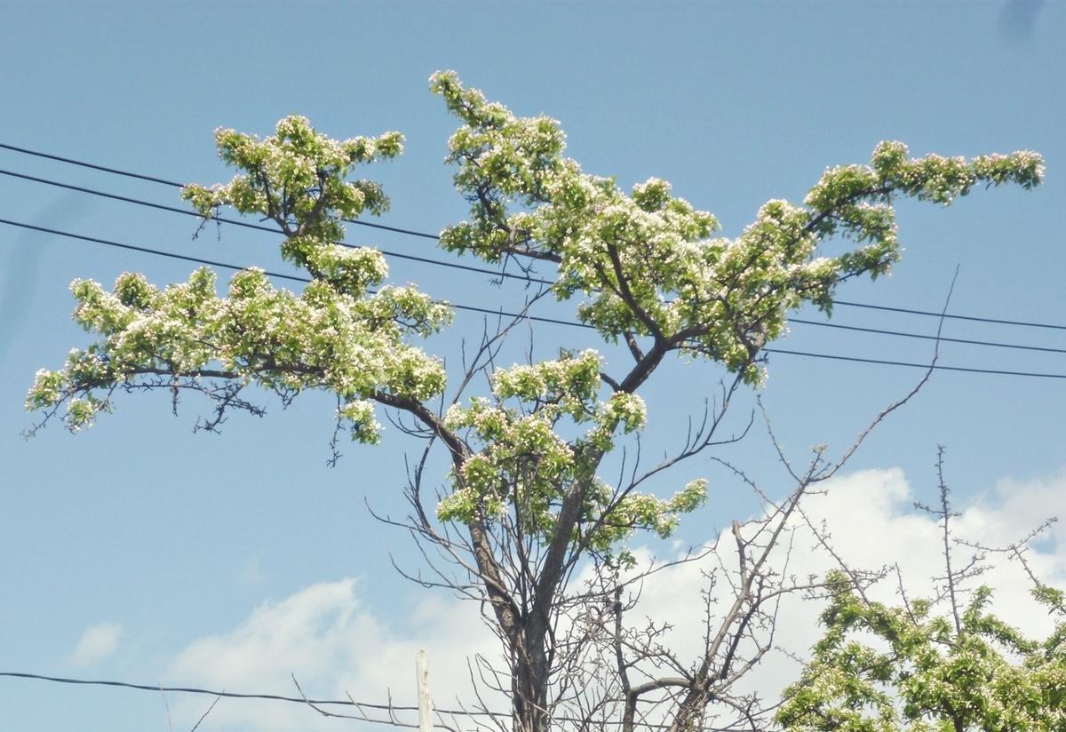 おうち時間 庭 近くの街路樹
