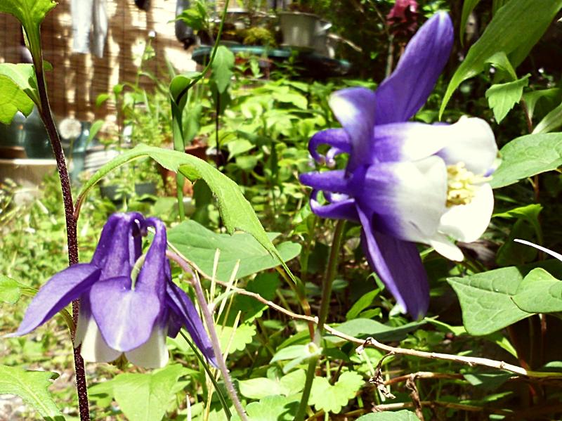 紫と白の花