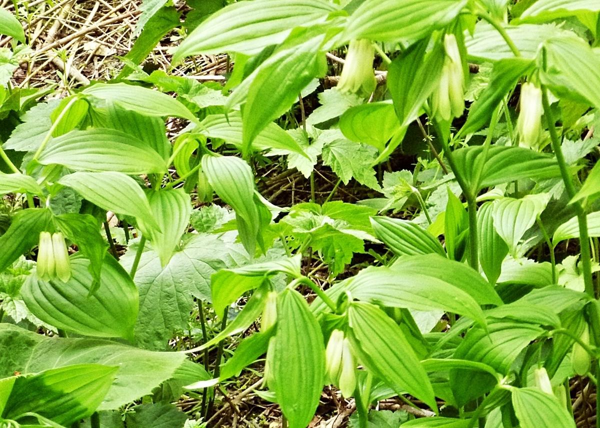 裏庭 白い花