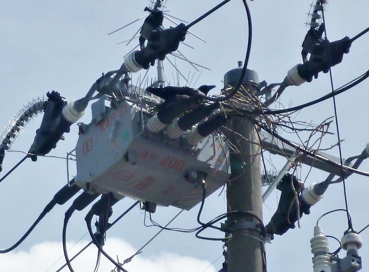 電柱とカラスの巣
