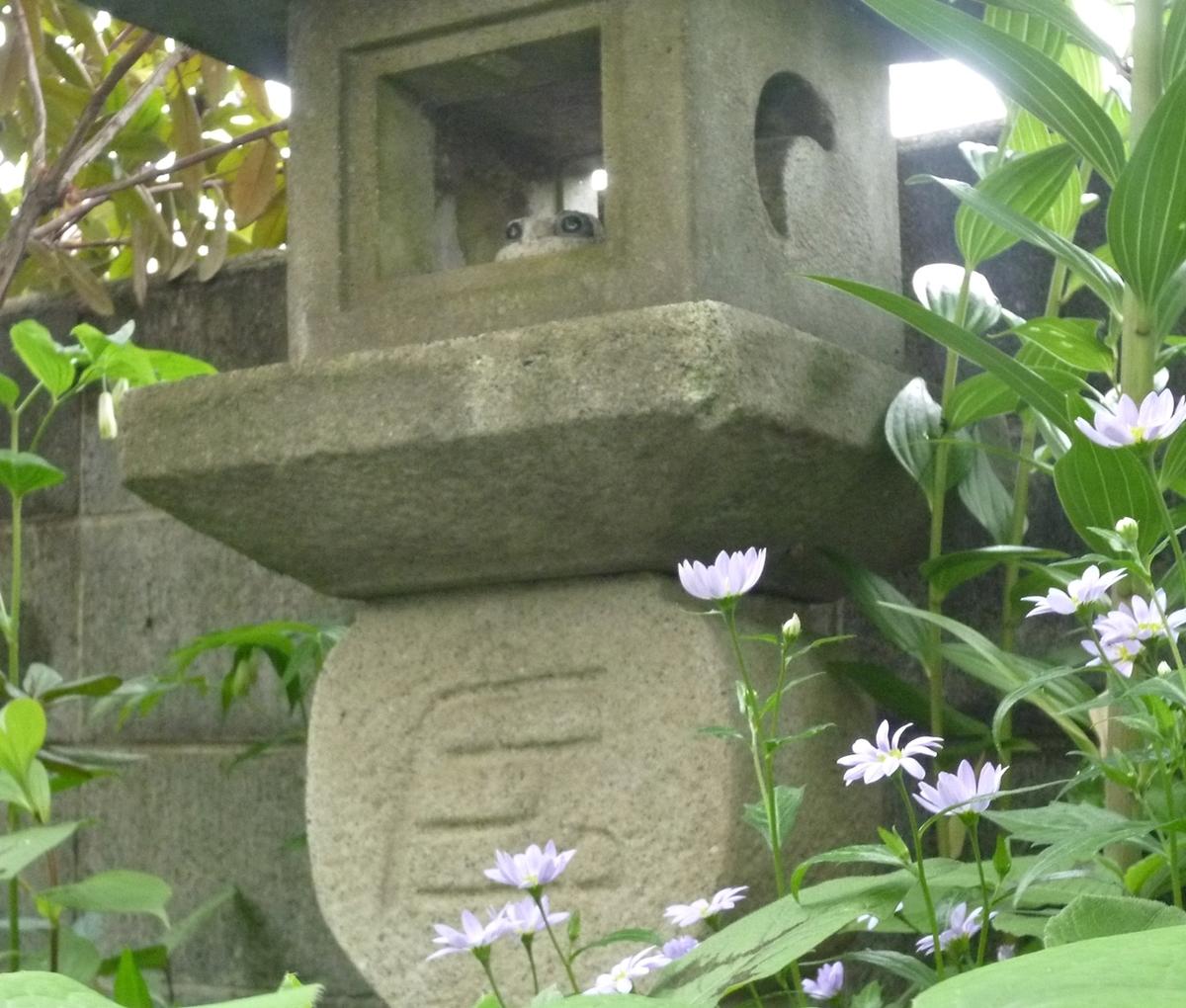 石灯篭とカエルの置物と小さい菊