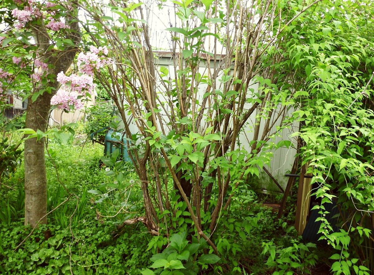 ピンクの花の幹と根元