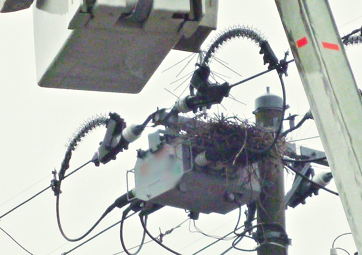 カラスの巣 撤去作業