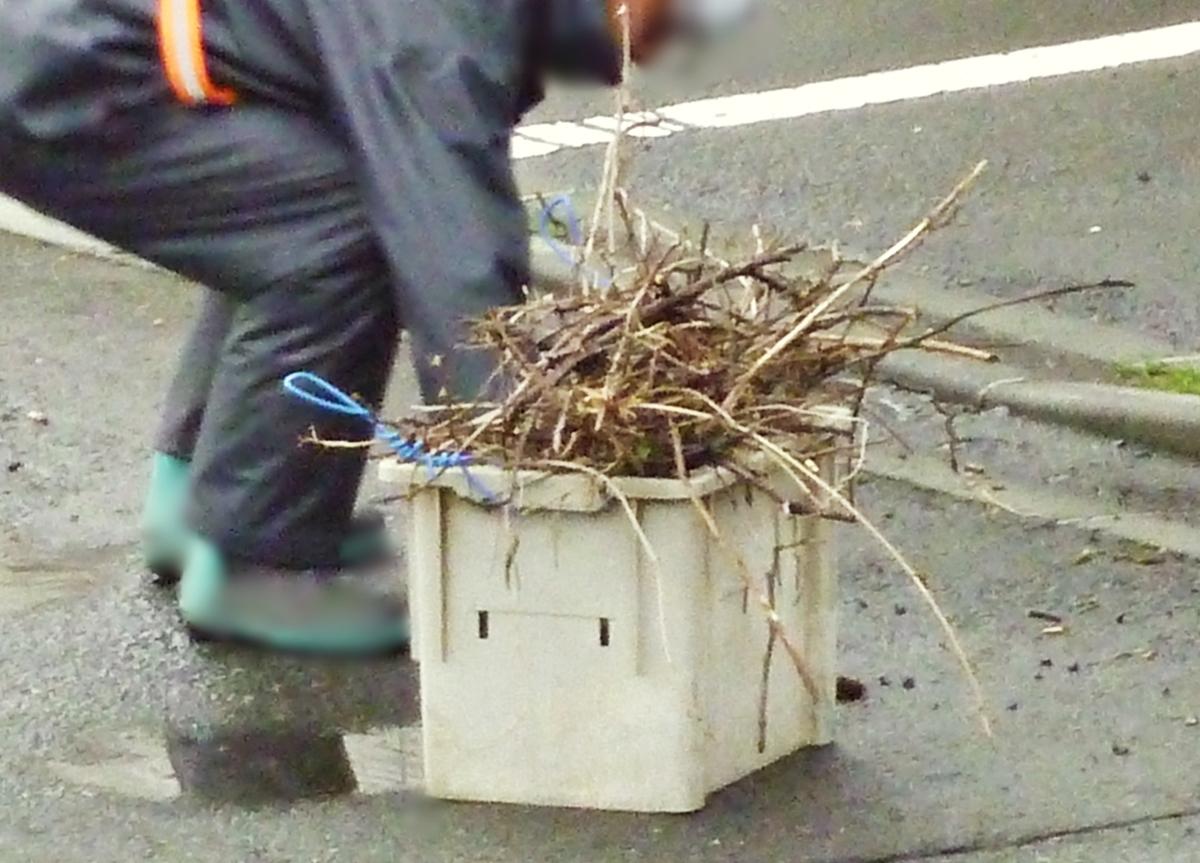 道路の枝を拾う作業