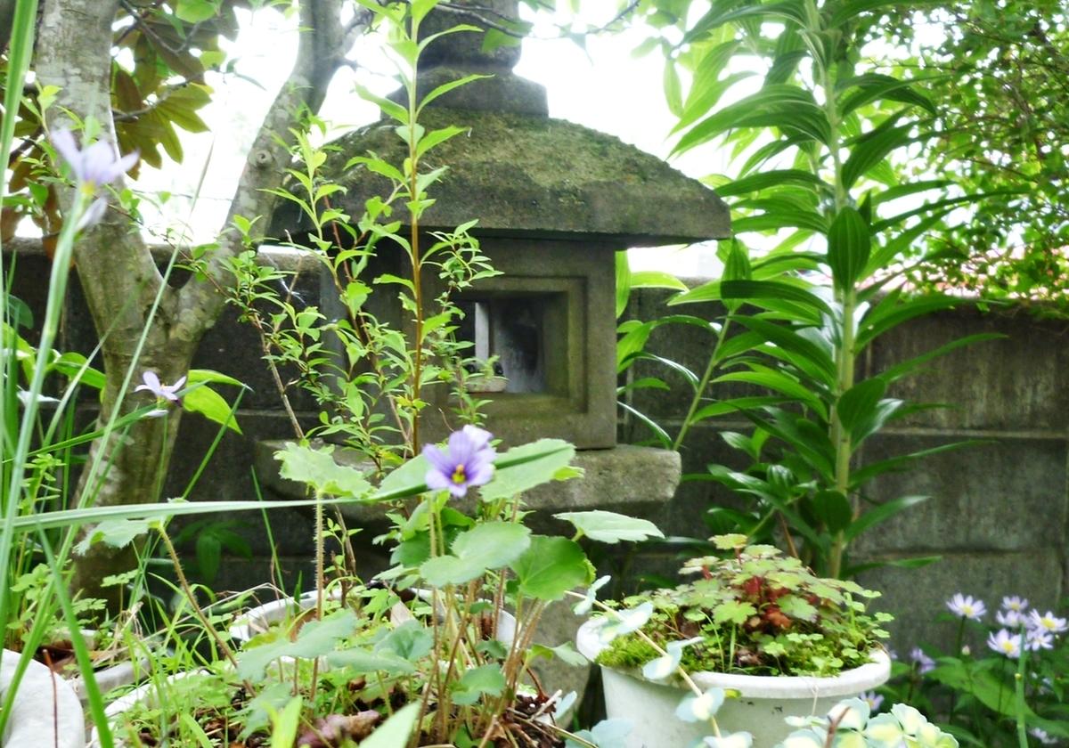 薄紫色の花に囲まれるカエルの置物