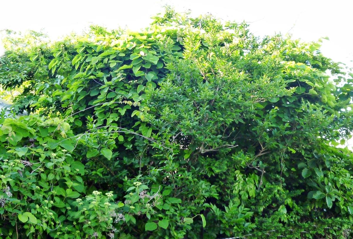 庭の緑 樹木