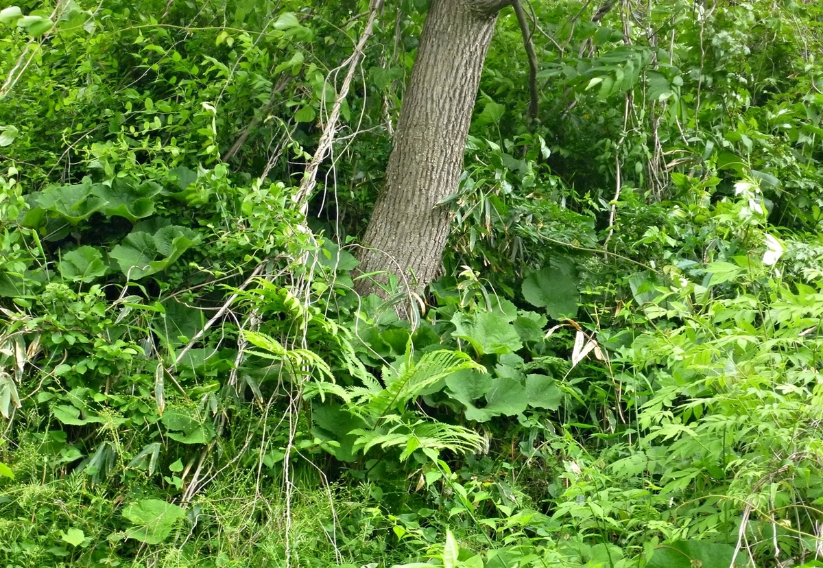 斜めの木の根元