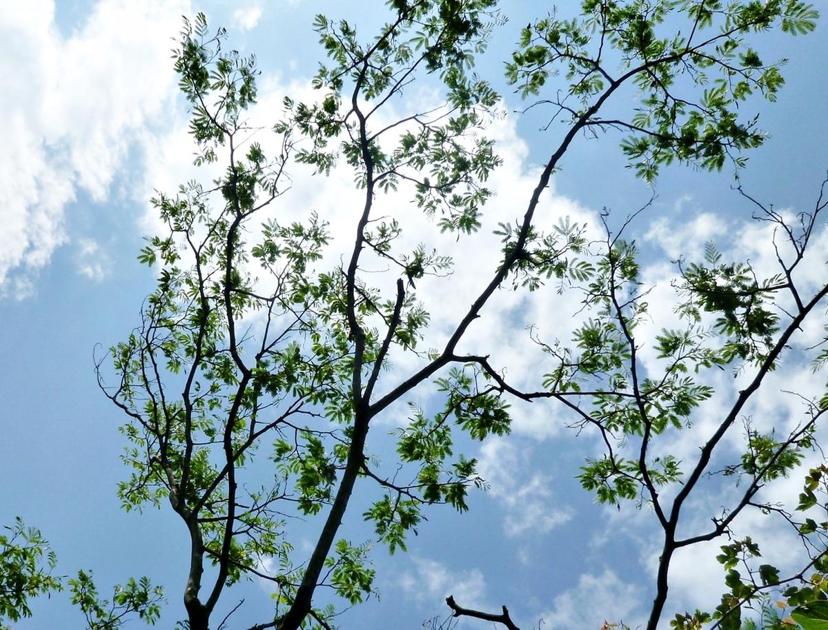 葉をつけた大木