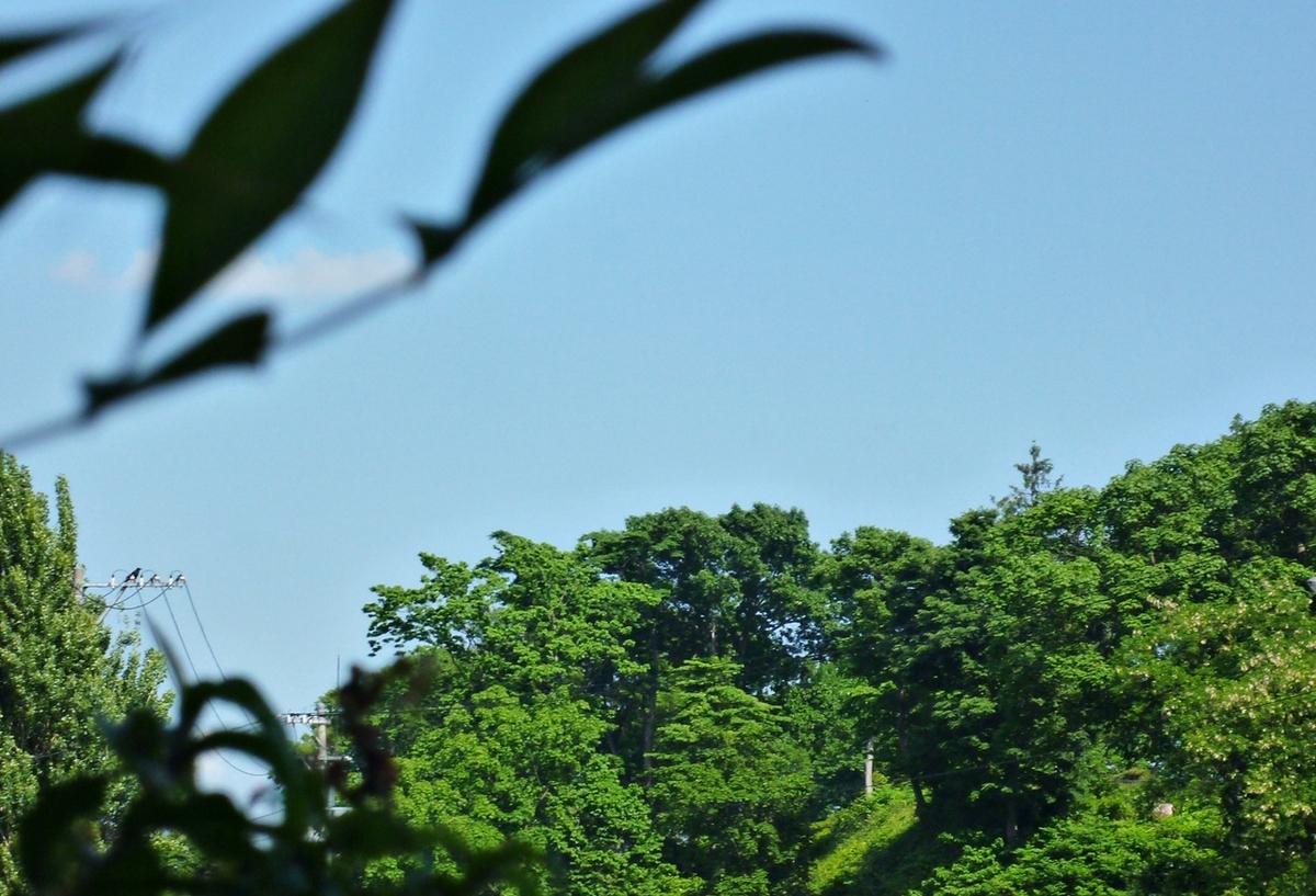 庭の葉と遠くの林