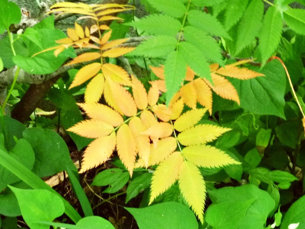 色が変わった葉