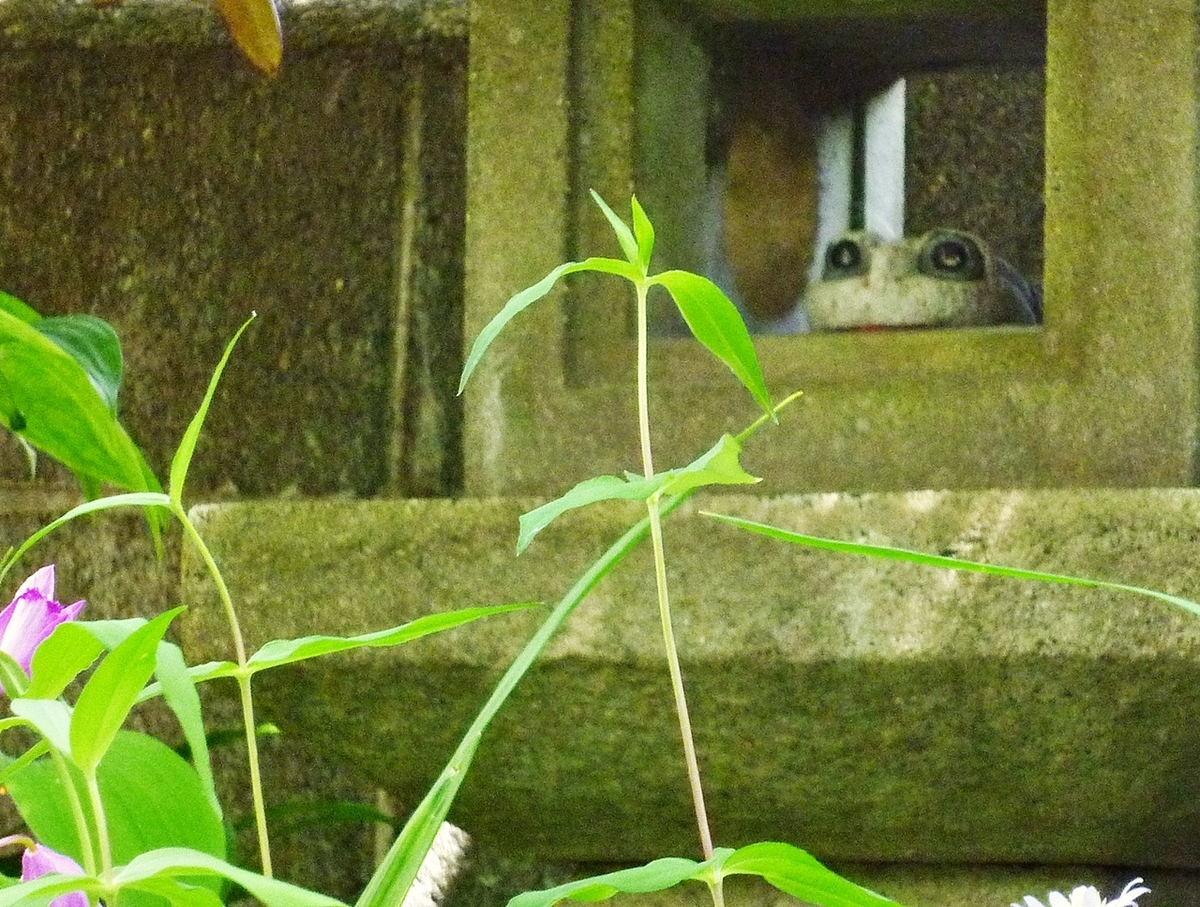 庭先 石灯篭 カエルの置物