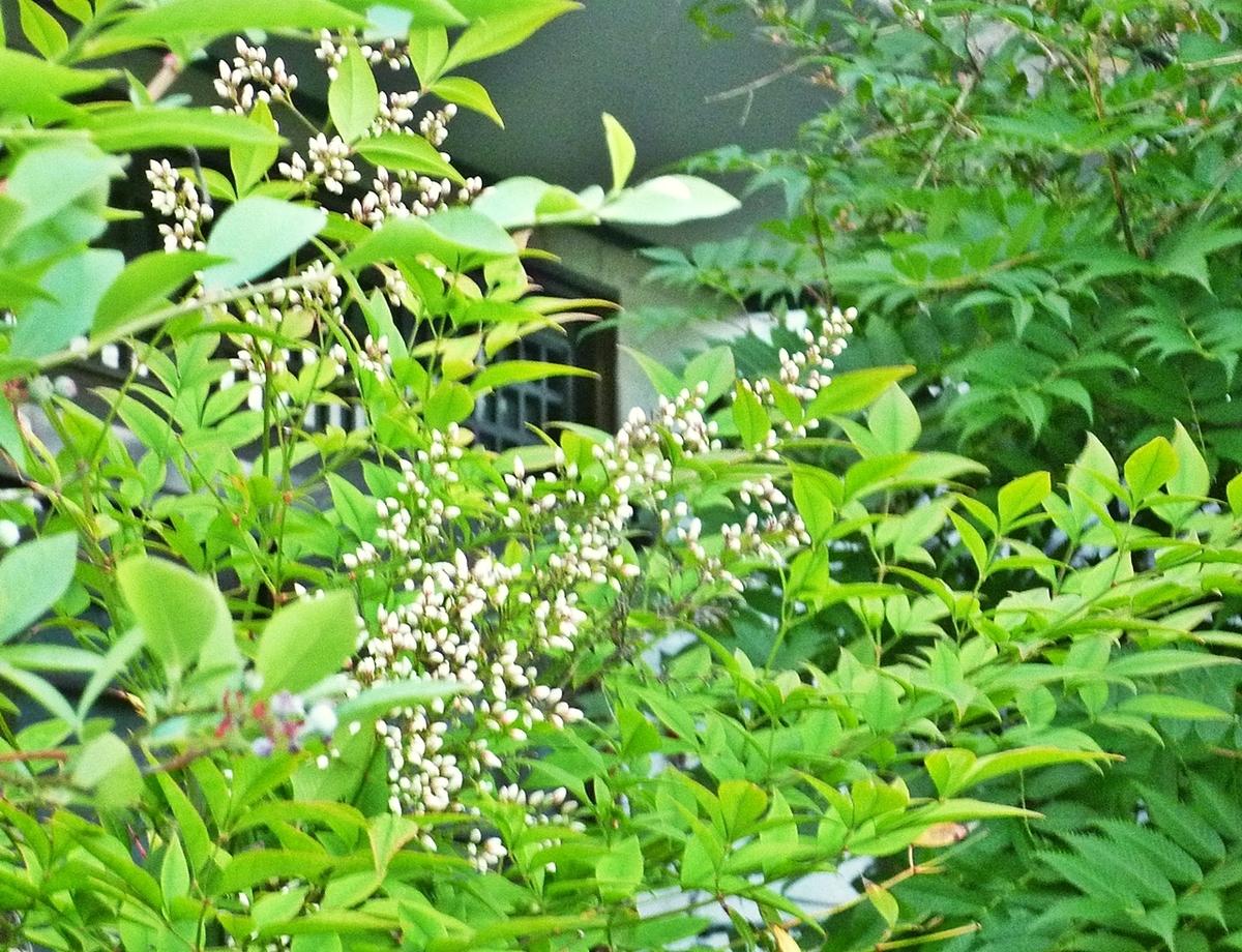 木の白いつぼみ