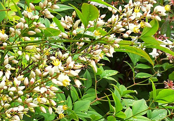 庭の木の黄色い花