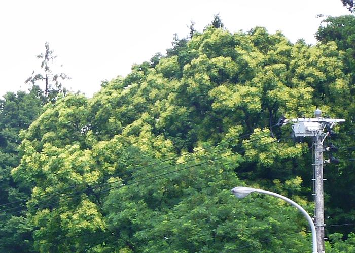 林の花を咲かせた木