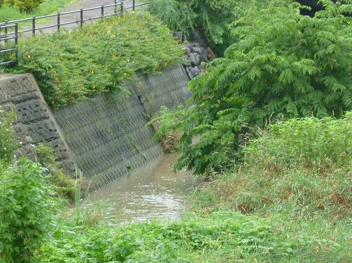 少し増水した川
