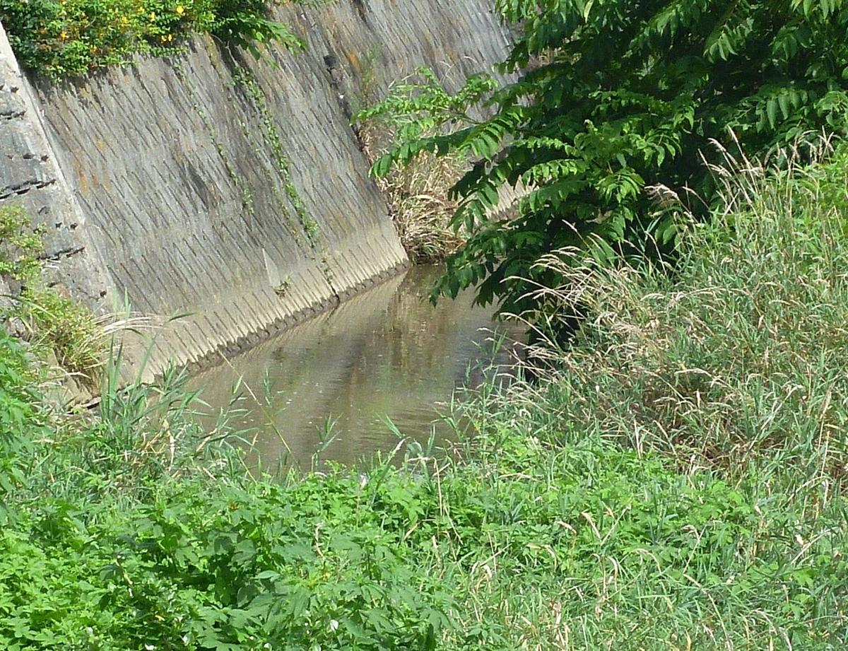 一昨日の川