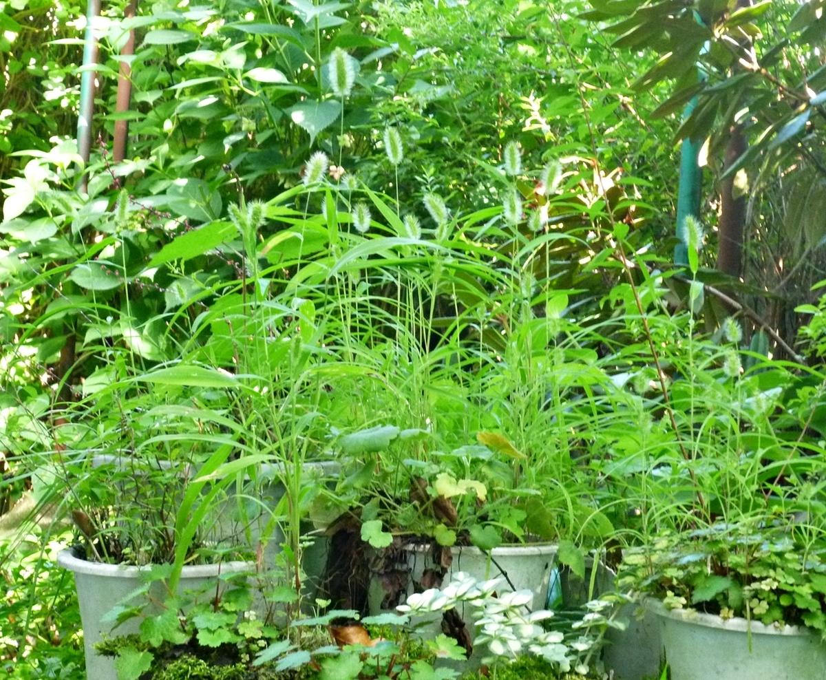 鉢植えゾーン