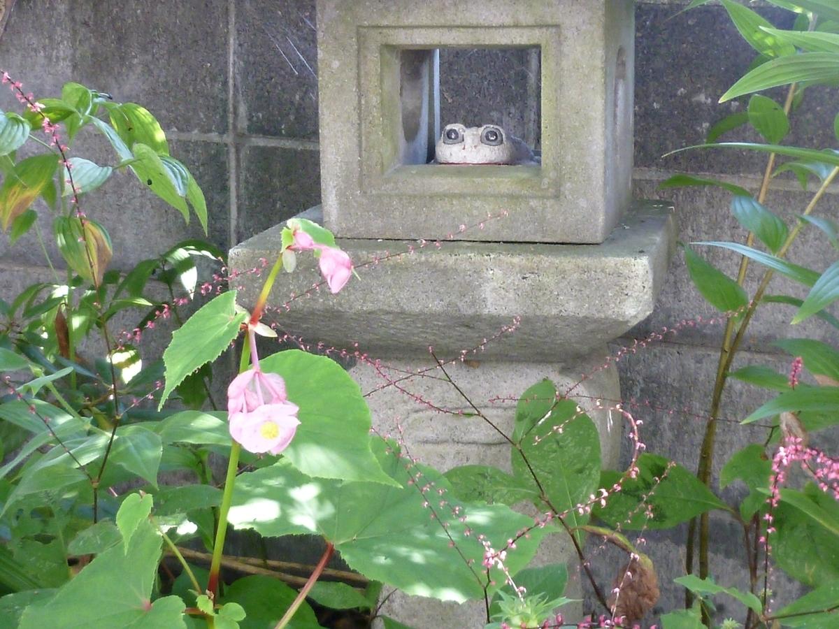 石灯篭のカエルとベコニアの花