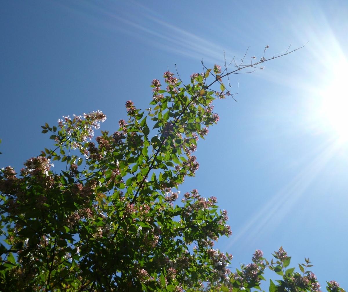 真上の空 庭の木と太陽