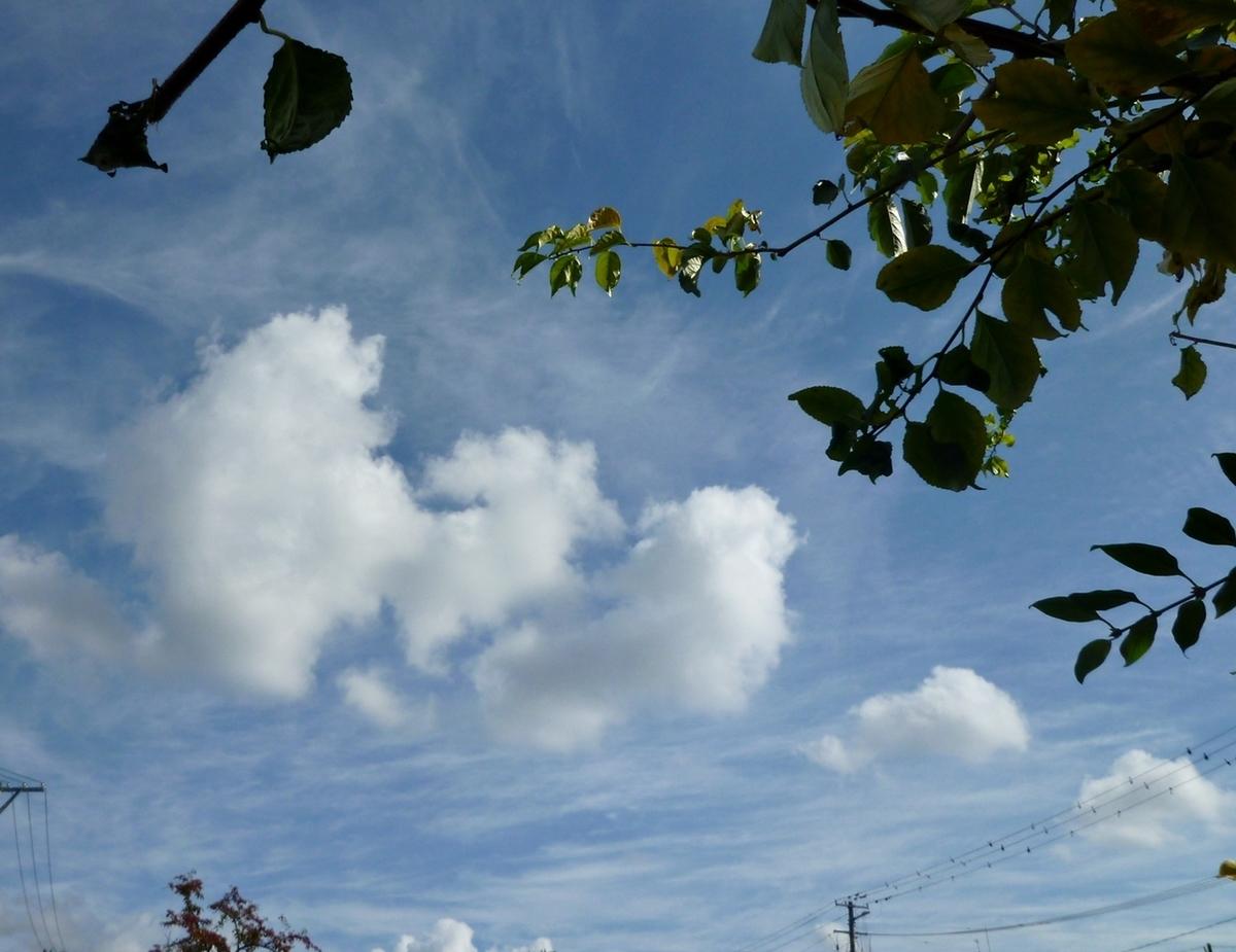 青空と雲と枝