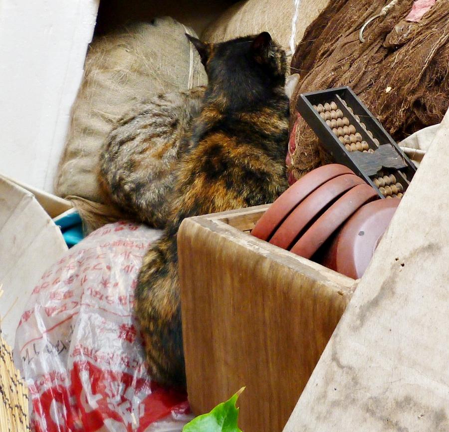 昼休み中の猫