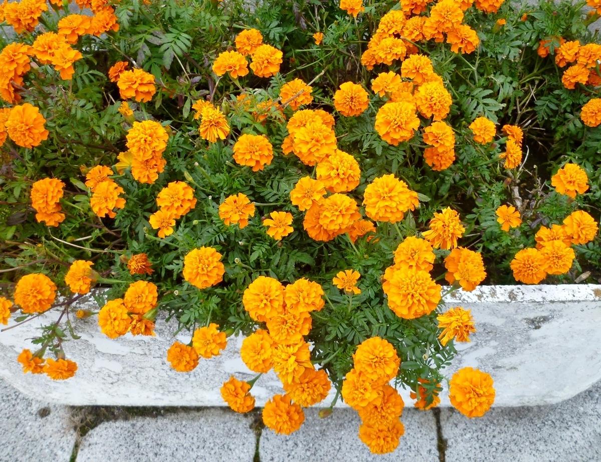 市役所脇の道路の花壇