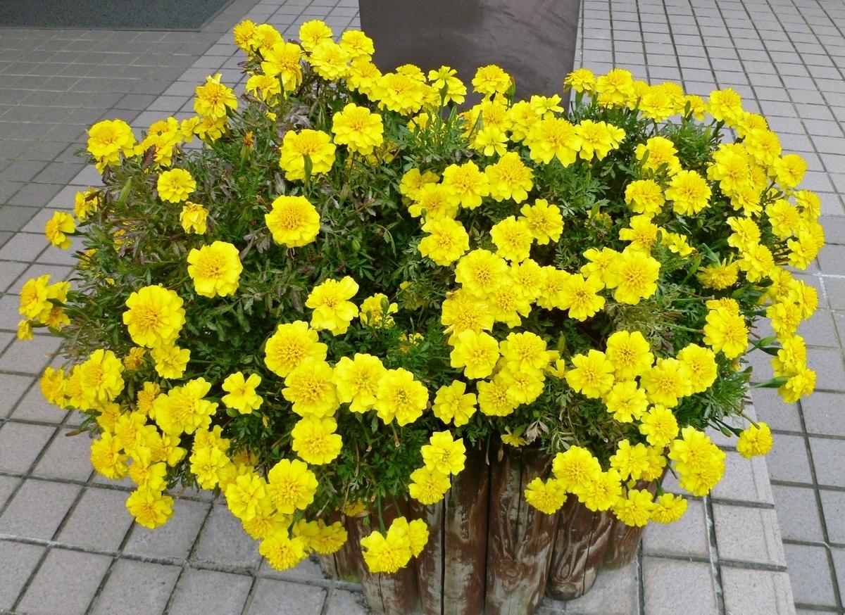 市役所の玄関に飾られた花