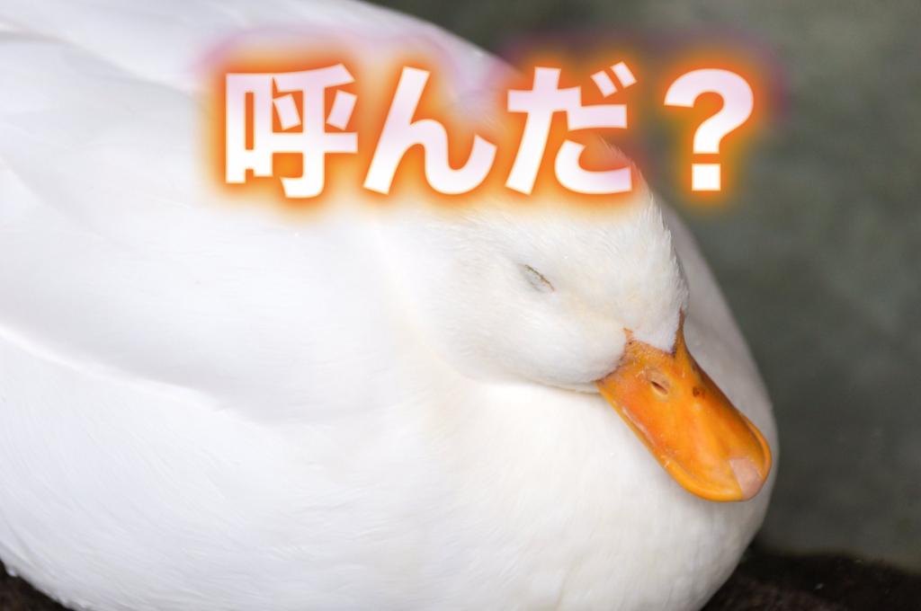 f:id:yamazaki-takashi:20160905234513j:plain