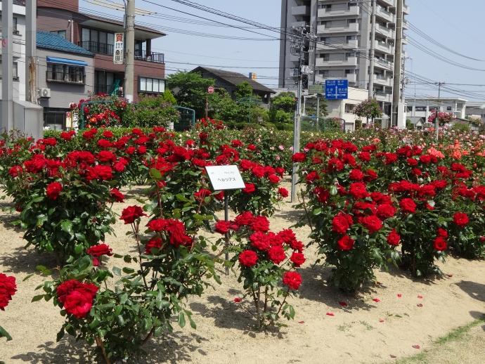 2014-0517-135842.jpg