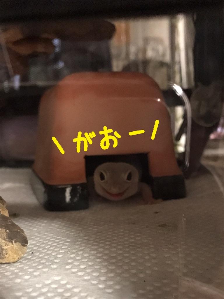 f:id:yamorimiyuki:20171128011110j:image