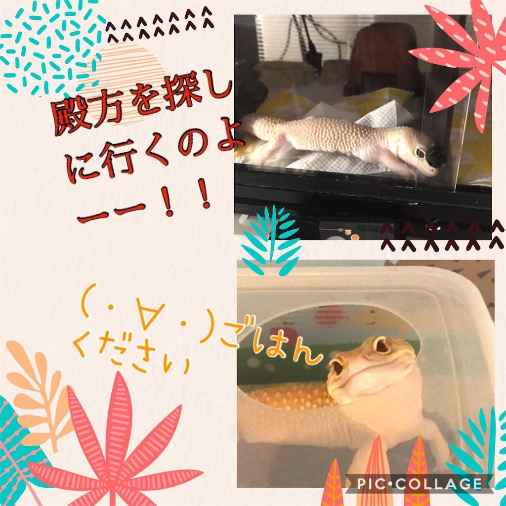 f:id:yamorimiyuki:20181201220322j:image