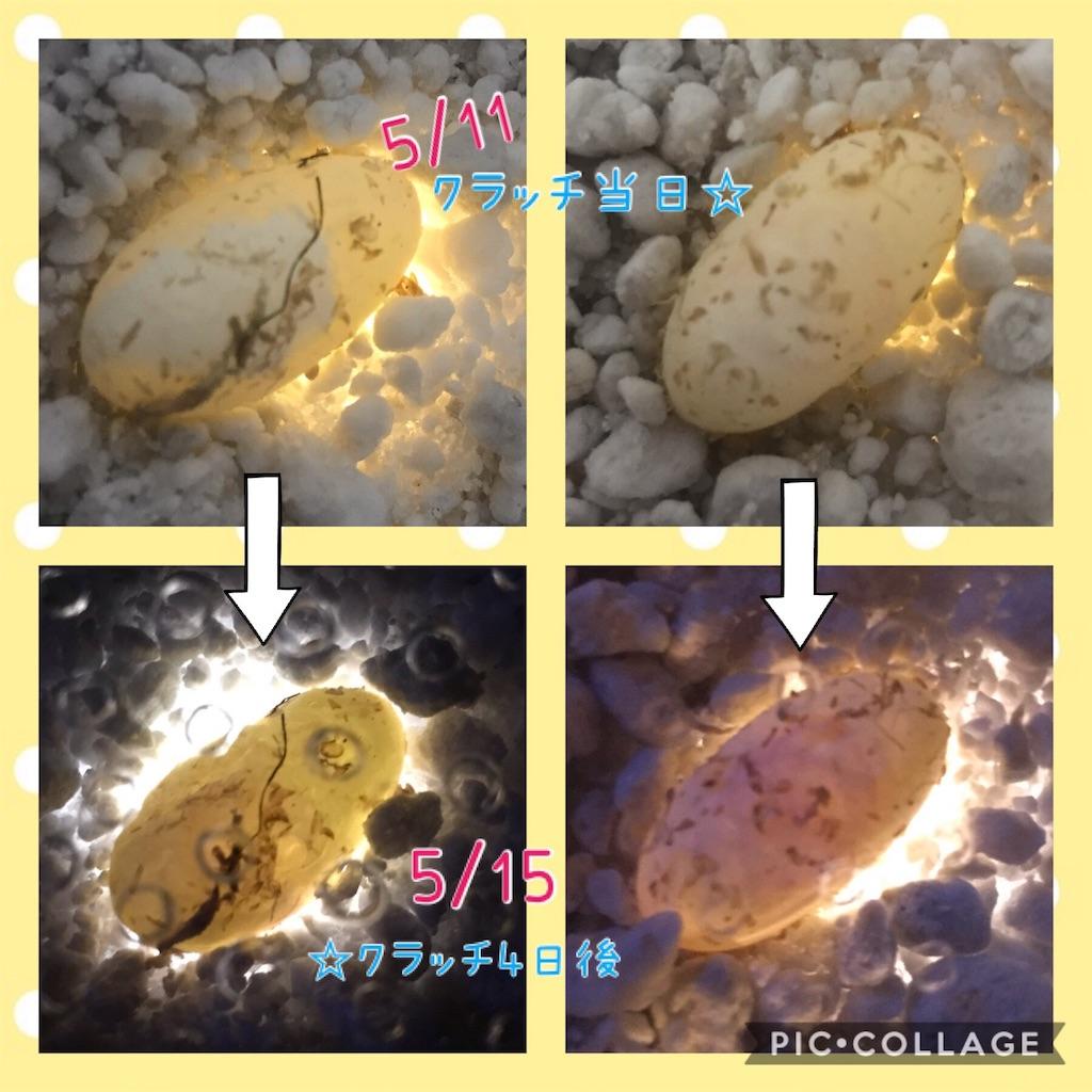 f:id:yamorimiyuki:20190516074802j:image