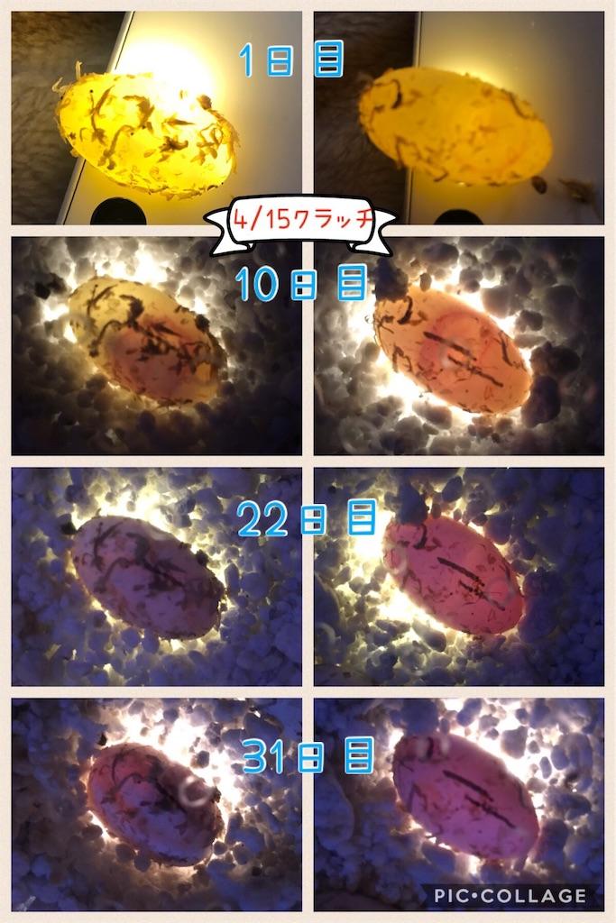 f:id:yamorimiyuki:20190516191607j:image