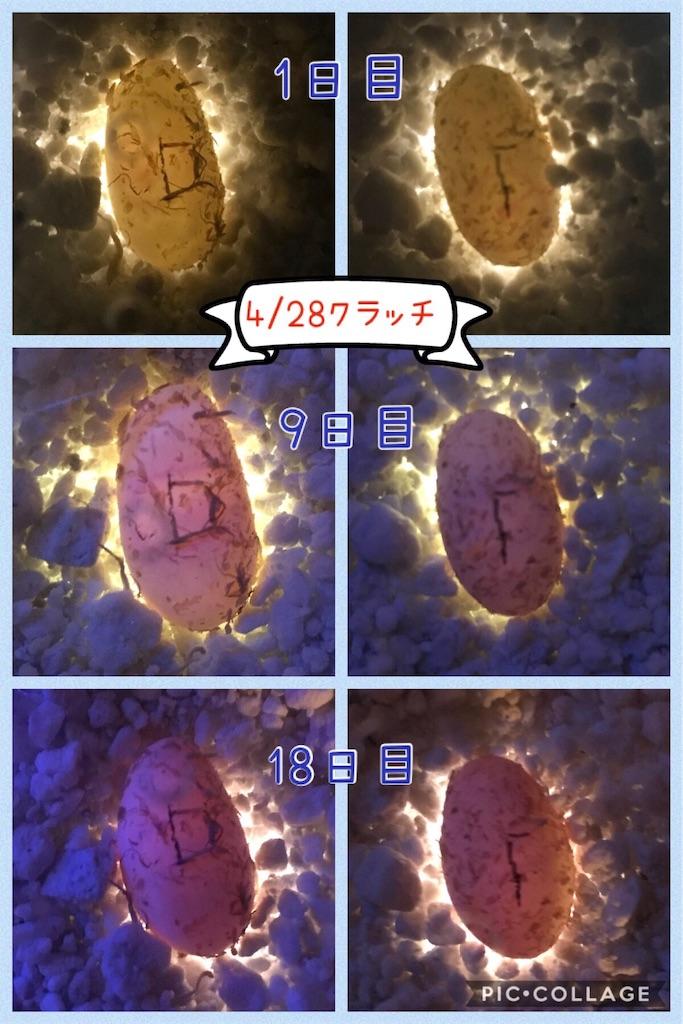 f:id:yamorimiyuki:20190516202701j:image