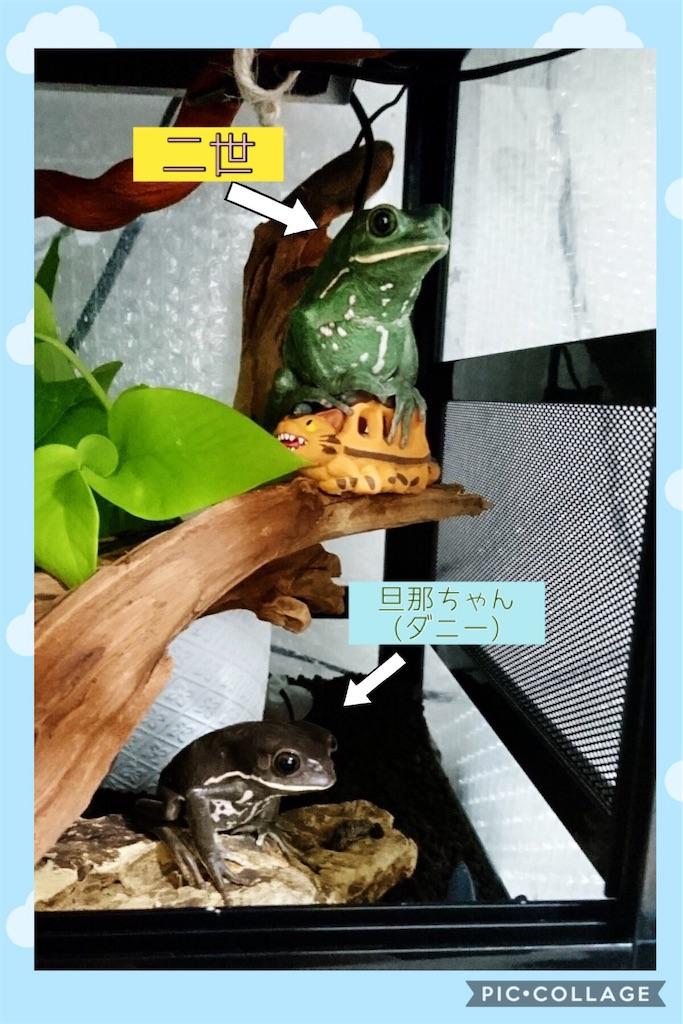 f:id:yamorimiyuki:20190520005811j:image