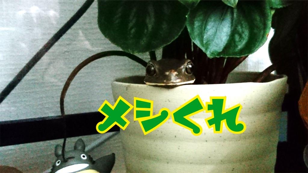 f:id:yamorimiyuki:20190525073810j:image