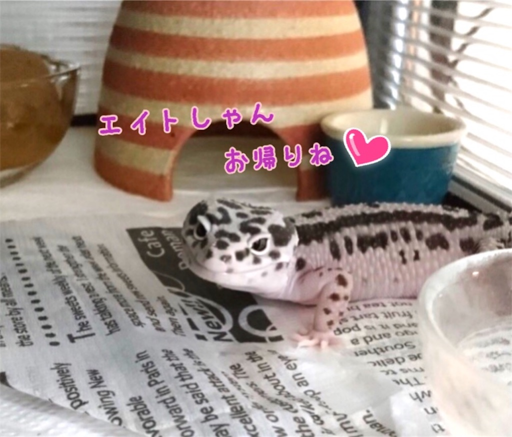 f:id:yamorimiyuki:20190525074227j:image