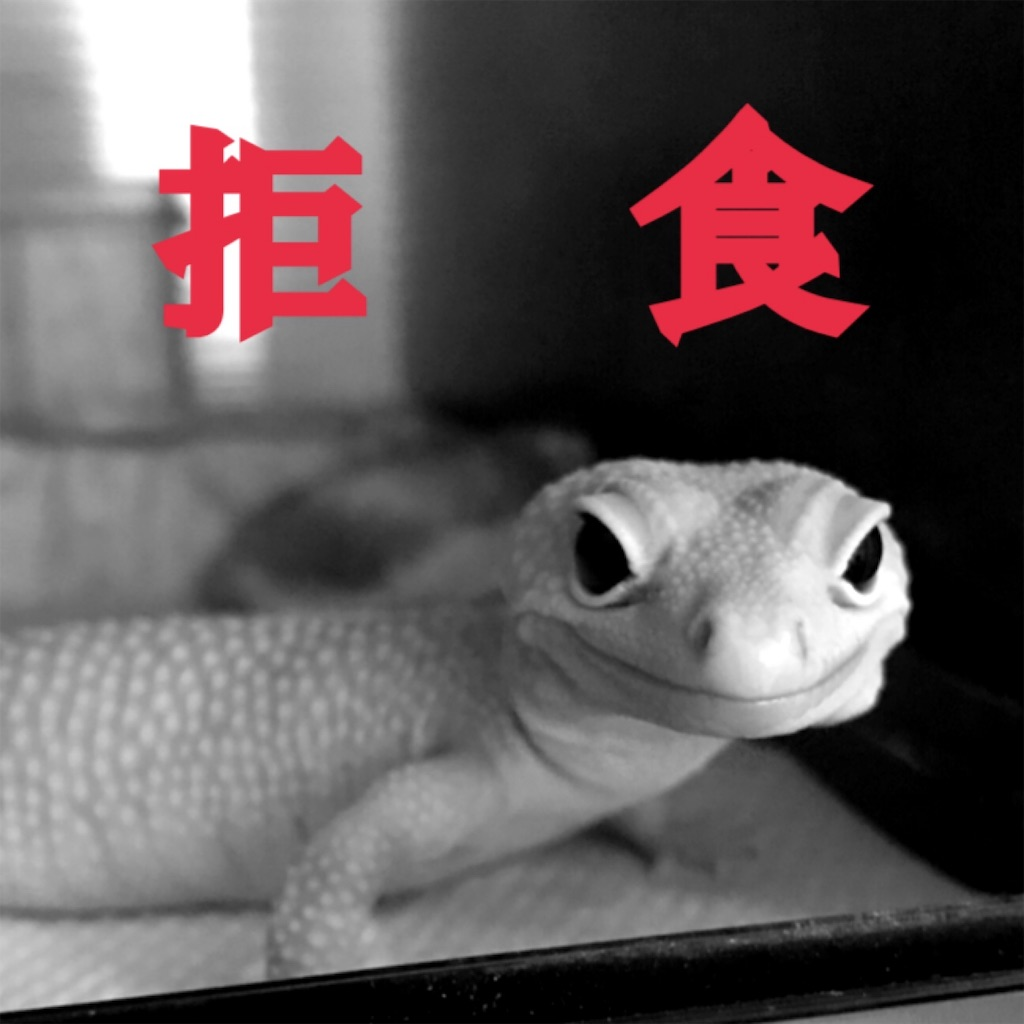 f:id:yamorimiyuki:20190830222625j:image