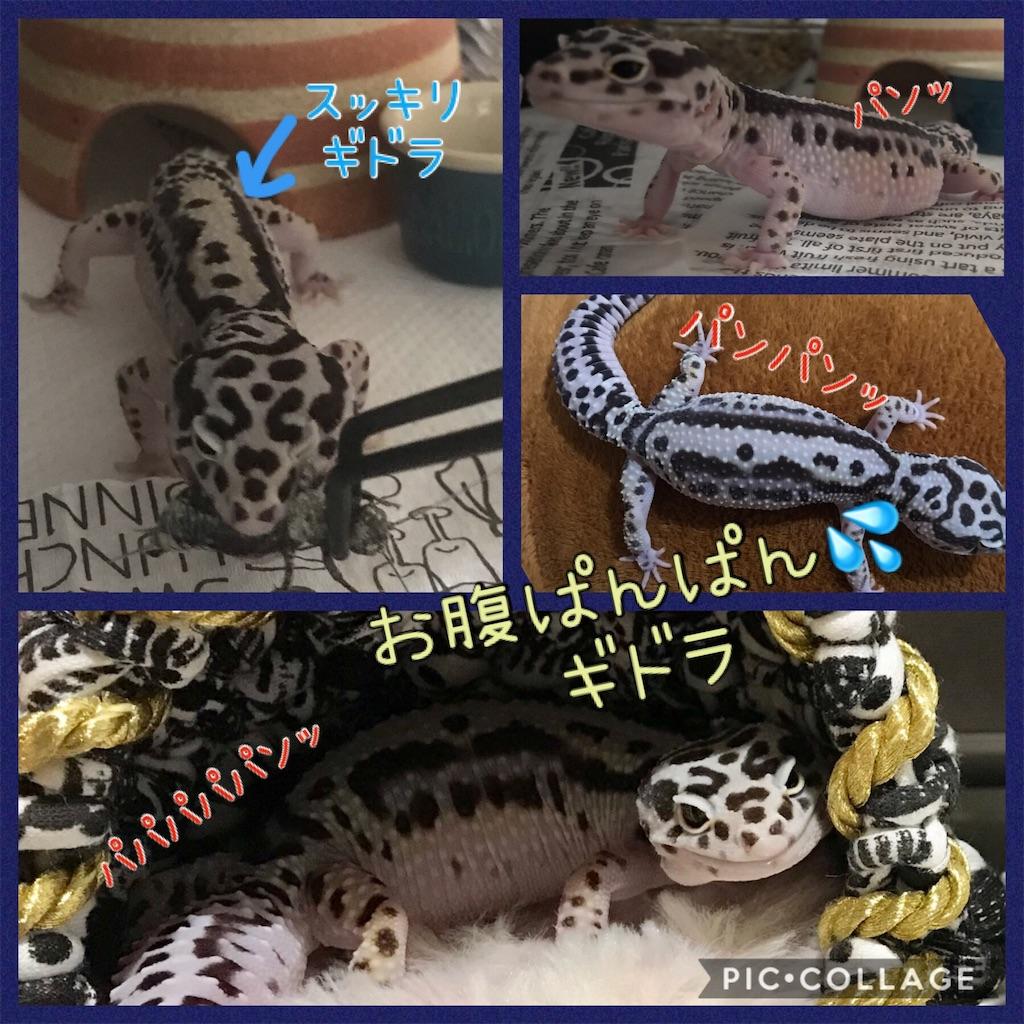 f:id:yamorimiyuki:20190902202306j:image