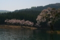 津南中子の桜