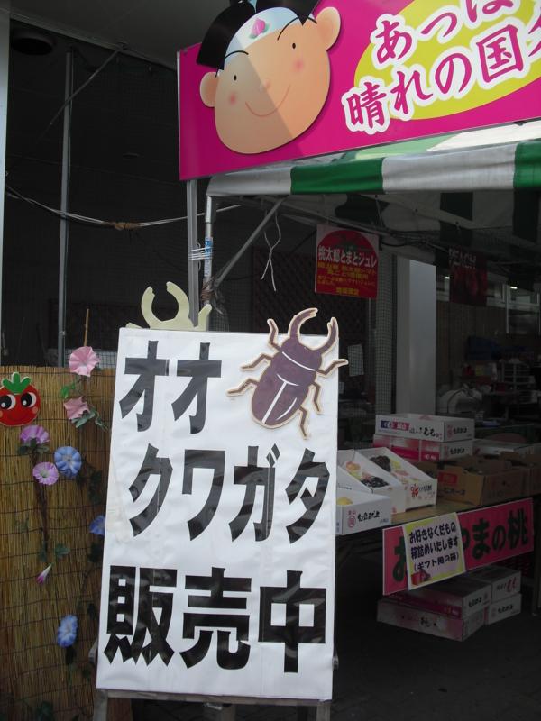 西日本はミヤマクワガタがメイン。ノコギリクワガタは見かけないそう