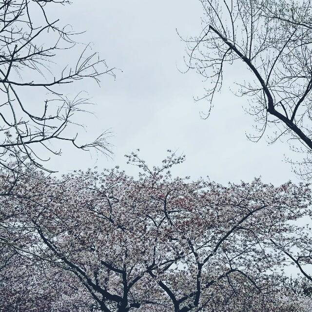 f:id:yanagishoko:20180408081832j:image