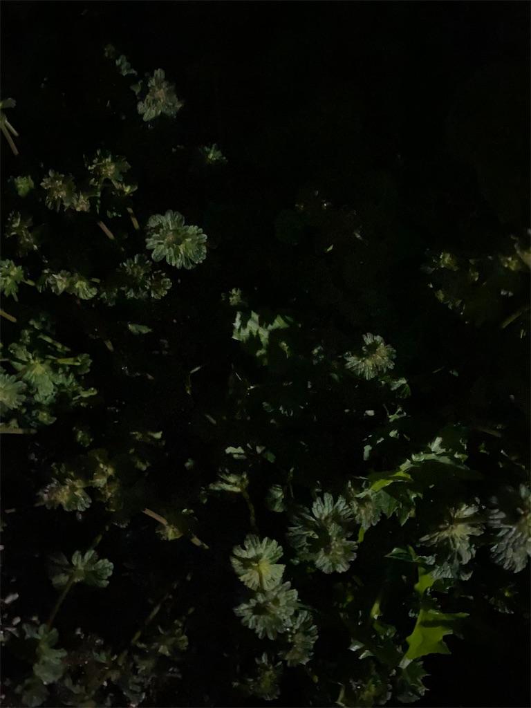f:id:yanaharamizuho:20210511065433j:image