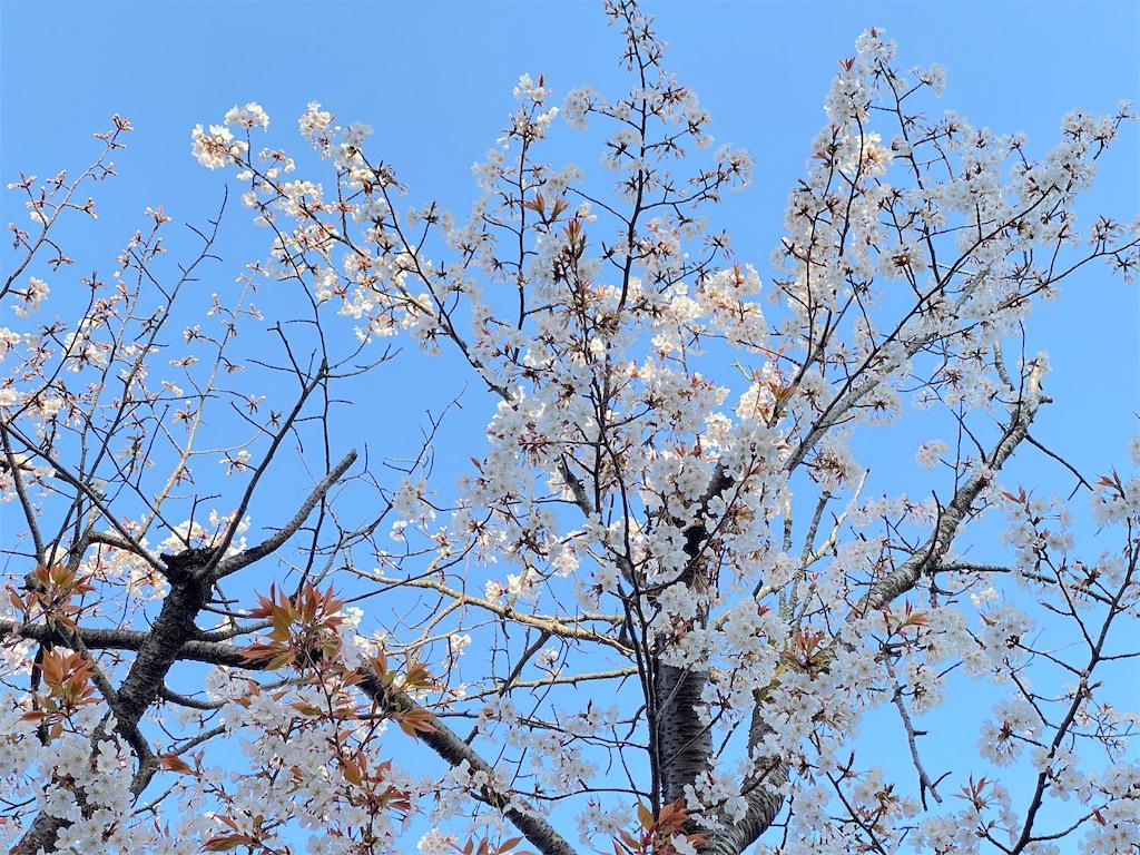 f:id:yanaharamizuho:20210525054050j:image